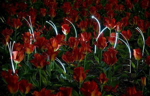 light sprout - landscaping
